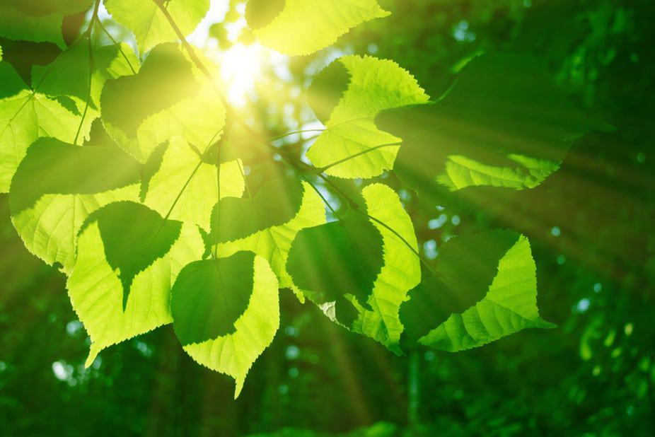 Photosynthesis holds lessons for solar technology | Energy